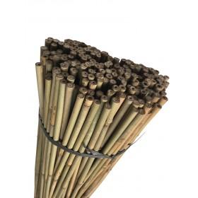 Tuteur Bambou D12-14 1m50 (lot de 250)