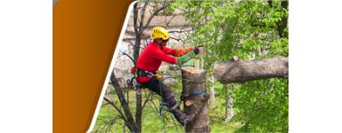 Démonter - Equipement abattage arbre