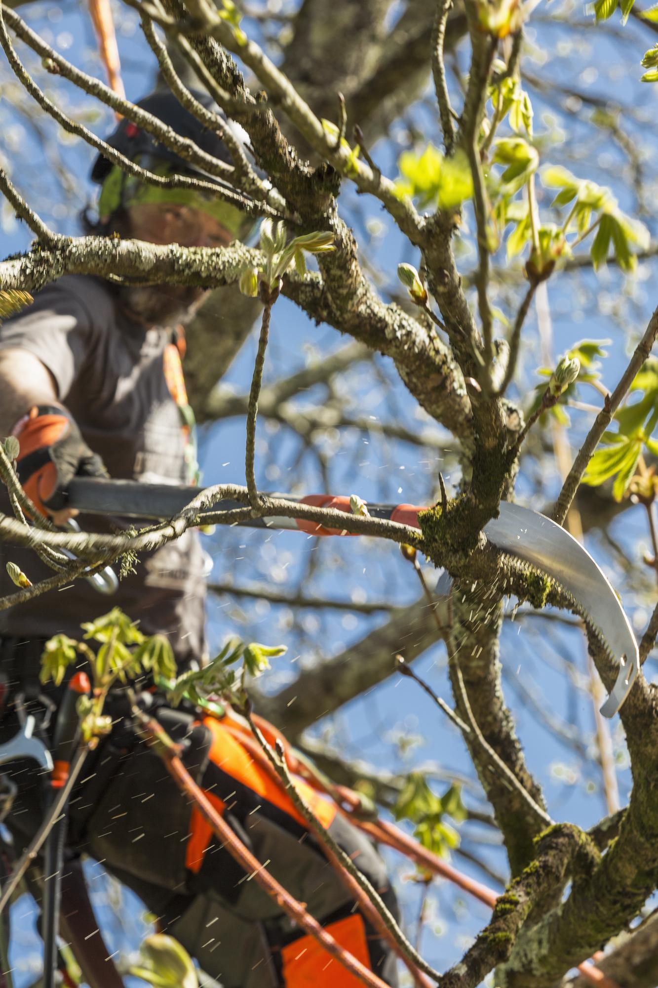 Coupe de branches difficile