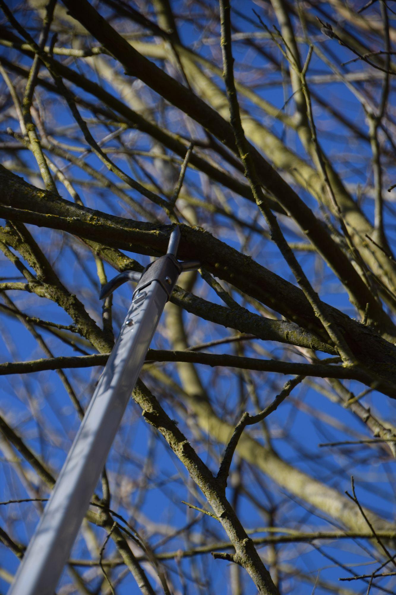 Branche en hauteur